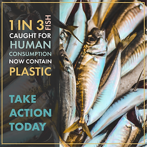 Plastic Pollution in Fish