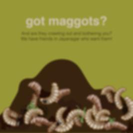 DD Maggots 2Artboard 1.png