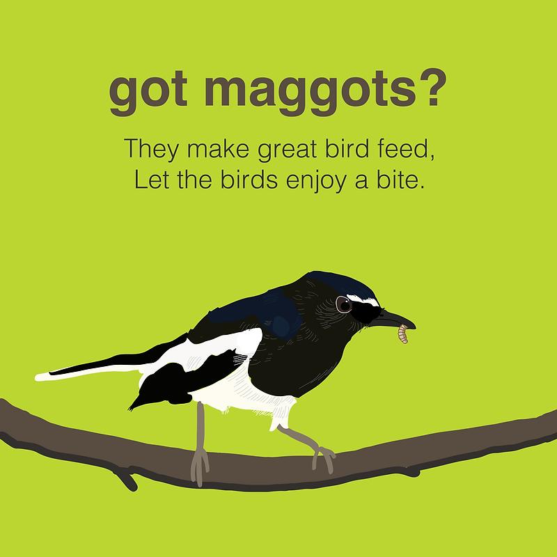 Maggot - bird feed2Artboard 1 copy 8.png