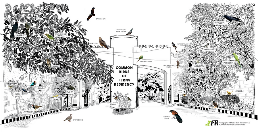 Birds of Ferns_FinalArtboard 12.png