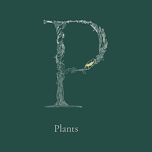 plant5Artboard 182.png