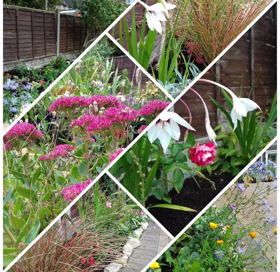 Front garden planting