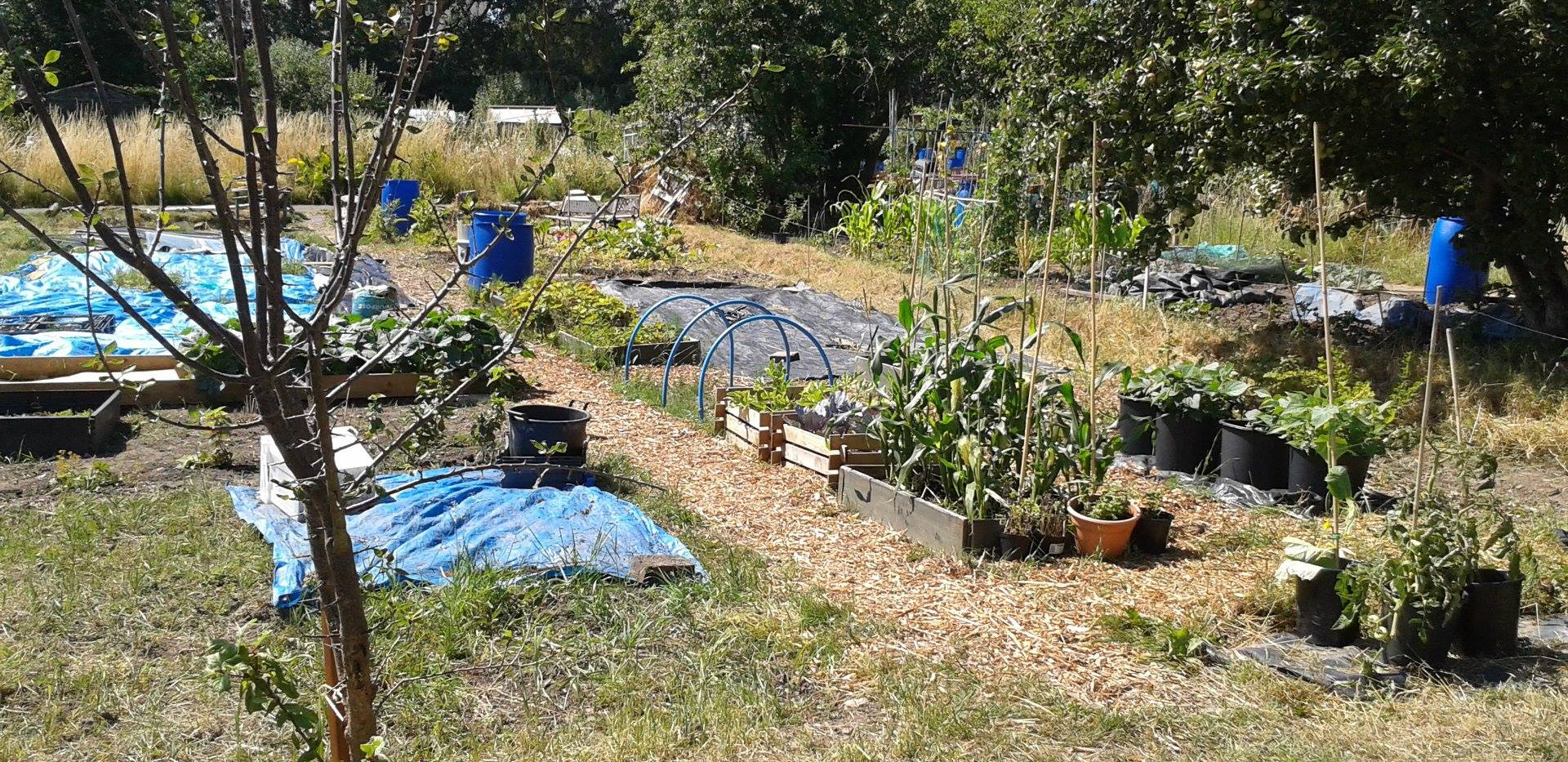 WHF Green Grafters Allotment Plot