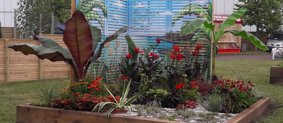 In Momento at BBC Gardeners' World Live 2021