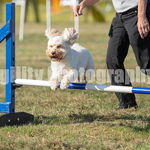 Valley Farm - Ring 5 Class 20 Small Jumping GD 1-3