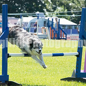 RVA Agility Show Ring 6 Class 29 Med Champ Jumping