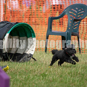 Redgates Agility Show - Ring 2 CL 44 Small Jumping Com 1-3
