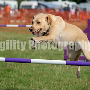 Redgate Agility Show - Ring 2 CL 13 Large Jumping Com 1-3