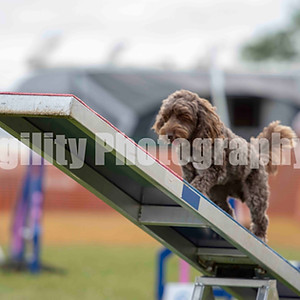 Redgates Agility Show - Ring 6 CL 39 Small Agility Com 6-7