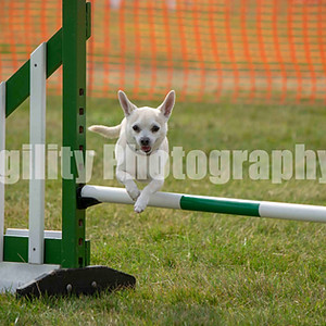 Redgates Agility Show - Ring 5 CL 82 Small Agility G 1+ 2