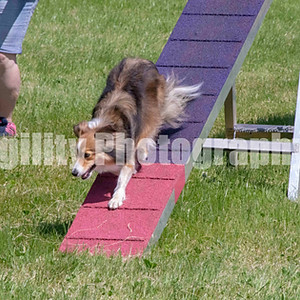 Wireless for Hounds Ring 3 Class 15 Med Agility Green Pantry Q G4 & 5
