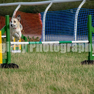 Letchworth DTC - Ring 3 Class 37 Allsorts Agility