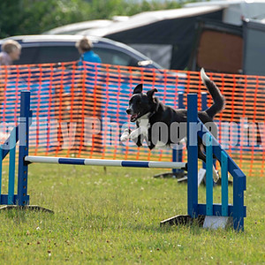 Redgates Agility Show - Ring 8 Any Size