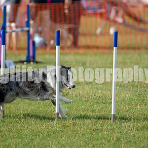 Redgates Agility Show - Ring 6 CL 7 Large Agility Com 6-7