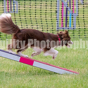 Wireless For Hounds Green Pantry Final