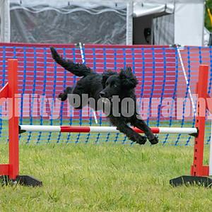 Agility Ability Sunday Class 44. Med Jumping G1-2