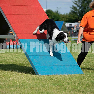 RVA Agility Show Ring 2 Class 68 Lge LHO Only Agility G4-5