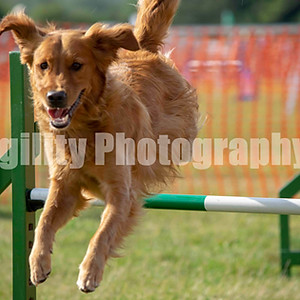 Redgates Agility Show - Ring 5 CL 50 Large Agility G 1+ 2