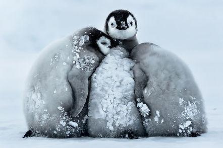 Pay-penguins_0712.jpg