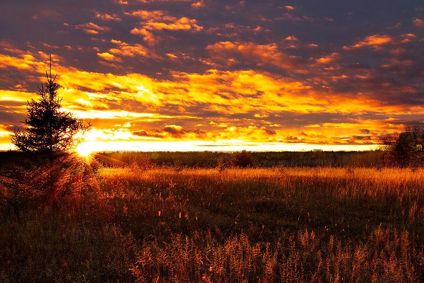 Golden Sunset in Dryden