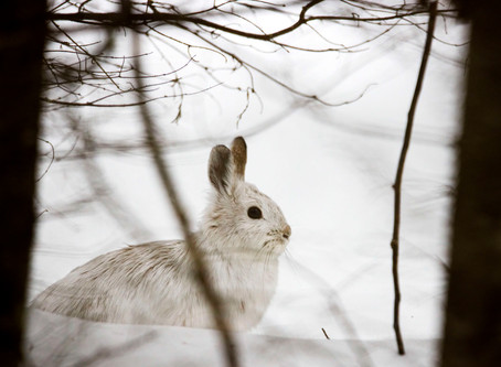 Bunny in the snow
