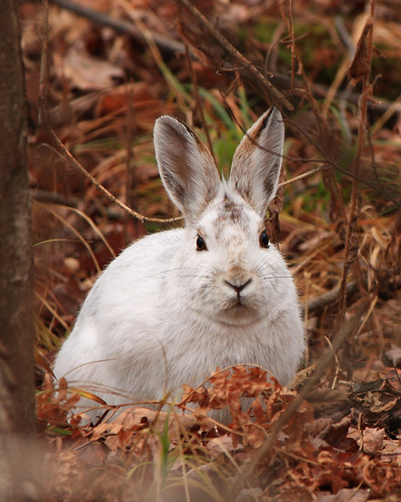 White Bunny in the Fall