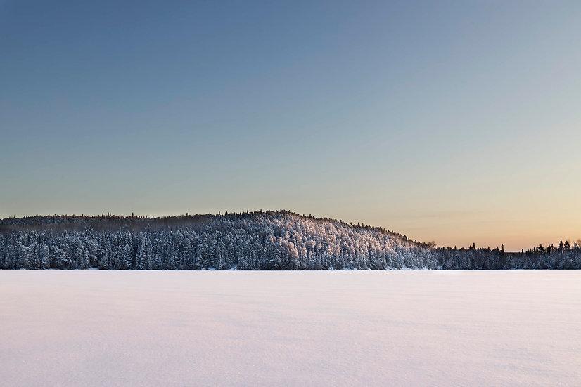 Winter's trees