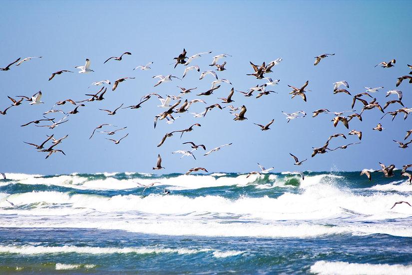 Birds over the ocean