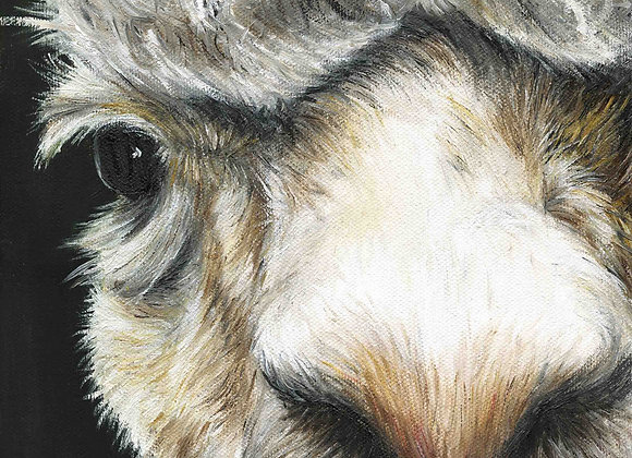"8""x8"" Alpaca Giclee Print"
