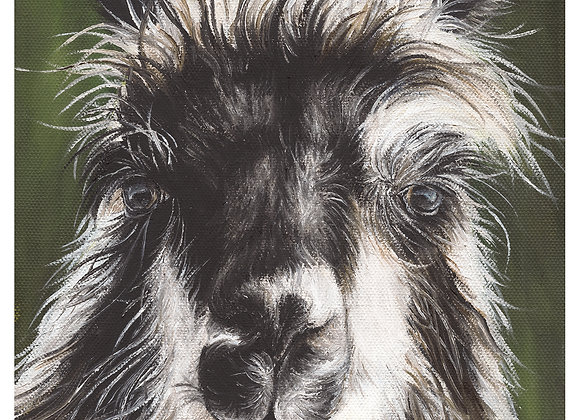 """5"""" x 5"""" Llama Greeting Card with Envelope (Rozzie)"""