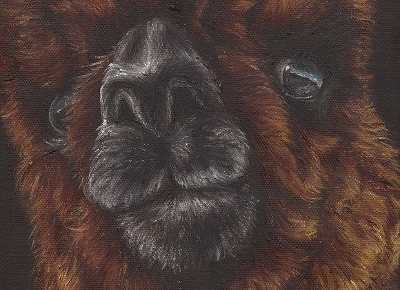 """8""""x8"""" Alpaca Giclee Print (Frankie)"""