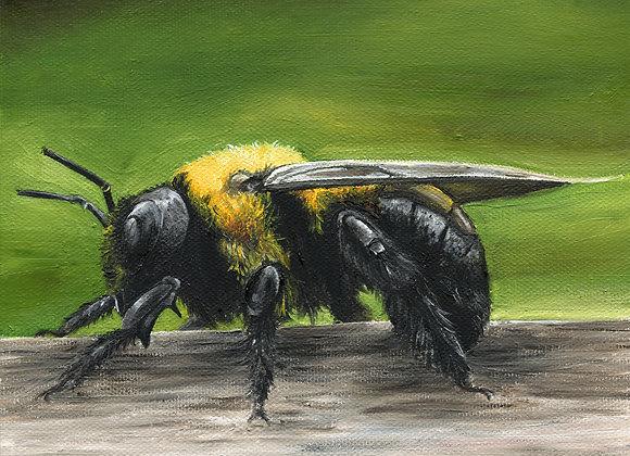 """8""""X8"""" Bee Giclee Print"""