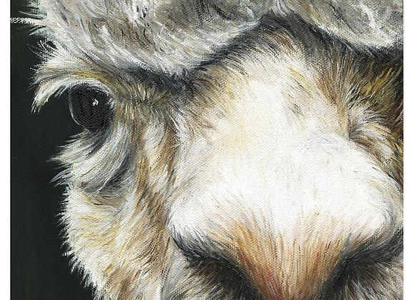"5"" x 5"" Alpaca Greeting Card with Envelope (Zima)"