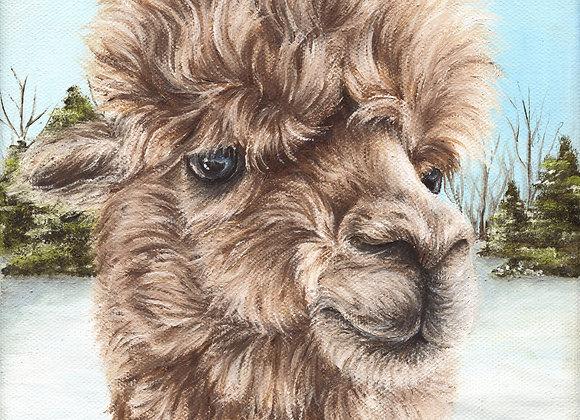 """8""""x8"""" Alpaca Giclee Print (Cali)"""