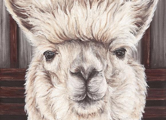"8""x8"" Alpaca Giclee Print (Olivia)"