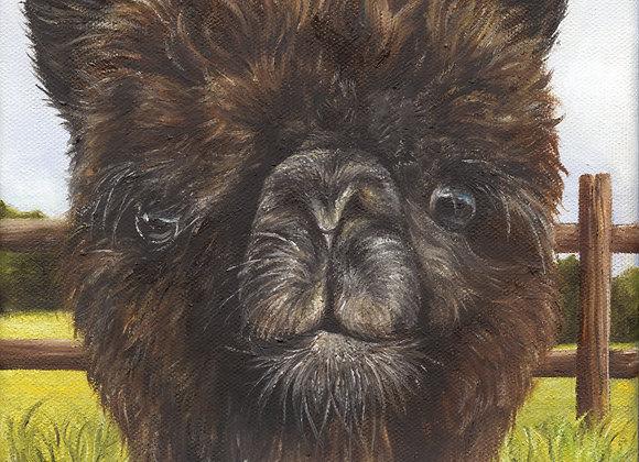 "8""x8"" Alpaca Giclee Print (Rum Chata)"