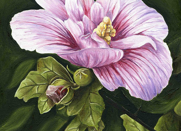 "8""X8"" Original Rose of Sharon Oil Painting"