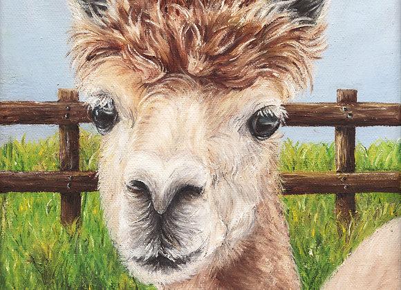 "8""x8"" Alpaca Giclee Print (Adagio)"