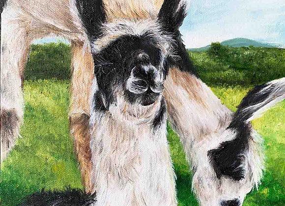 """8""""x8"""" Baby Llama Giclee Print (Rozzie)"""