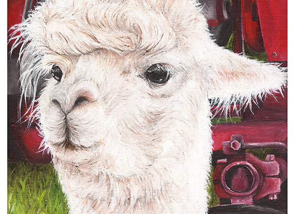 """5"""" x 5"""" Alpaca Greeting Card with Envelope (Lucia)"""