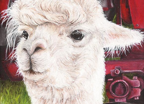 "8""x8"" Alpaca Giclee Print (Lucia)"