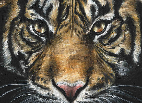 "8""x8"" Tiger Giclee Print"