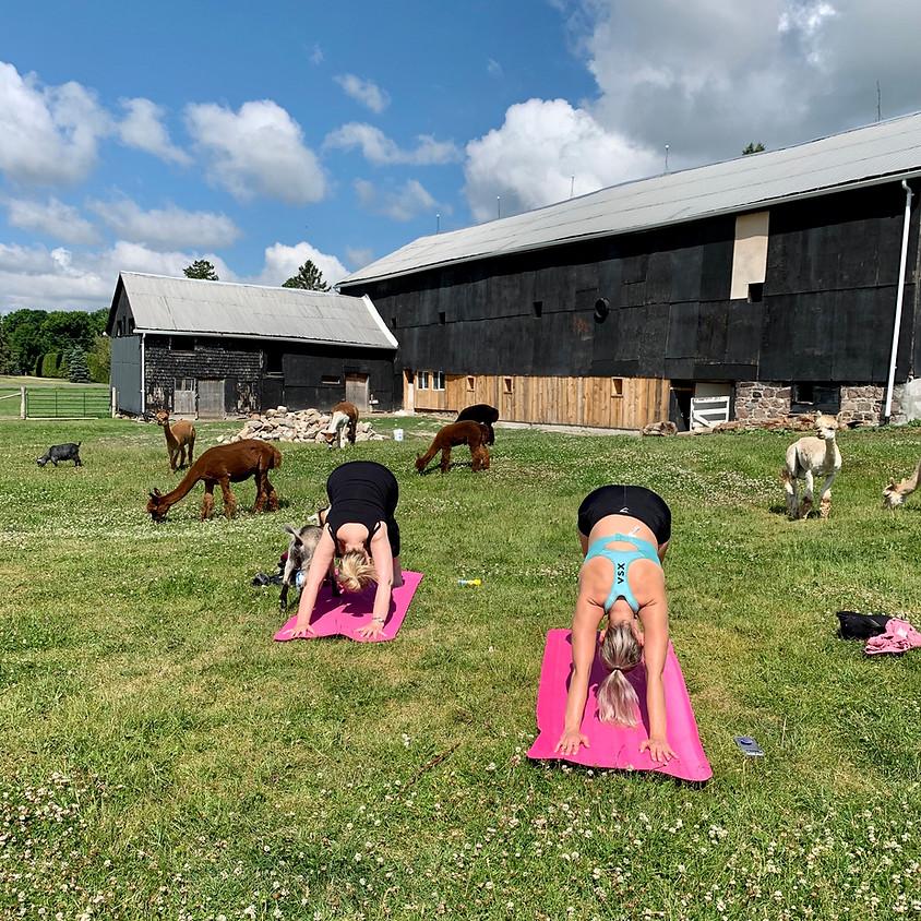 Barnyard Yoga