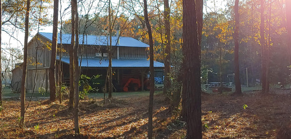 picture of the barn through the forrest