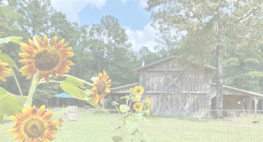 sunflowersvenuebarn_edited.jpg