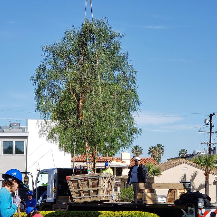 crane lifting new pepper2