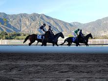 Exercise Horses