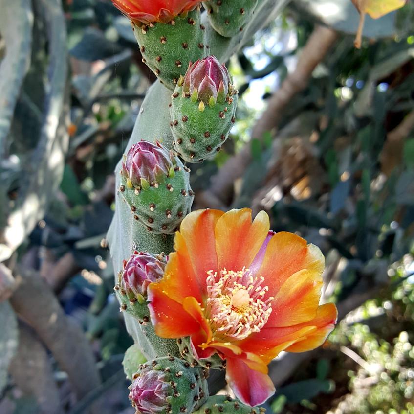orange cactus2