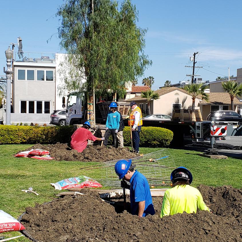 digging holes, planting pepper