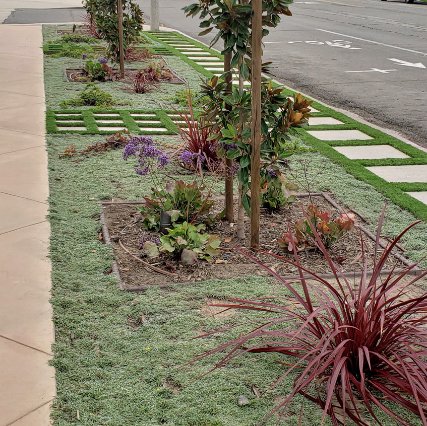 verticl square plantings